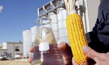 Mato Grosso produz etanol de milho