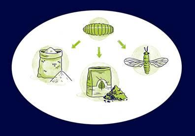 Empresa vai produzir biodiesel de insetos