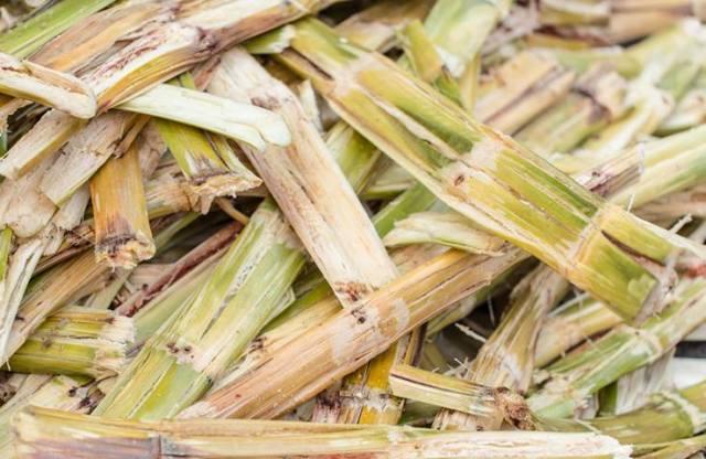 Descoberta pode aumentar em 50% produção de etanol