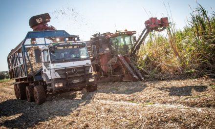 Na colheita, Axor 3131 não precisa de motorista